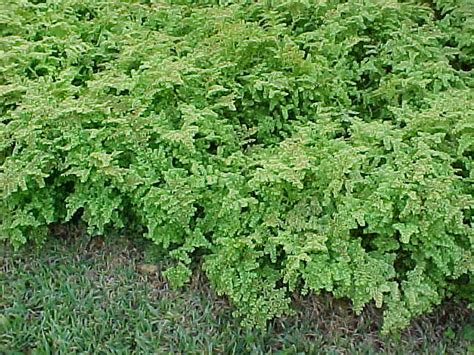 Tropical Ground Covers, Subtropical Ground Covers, List