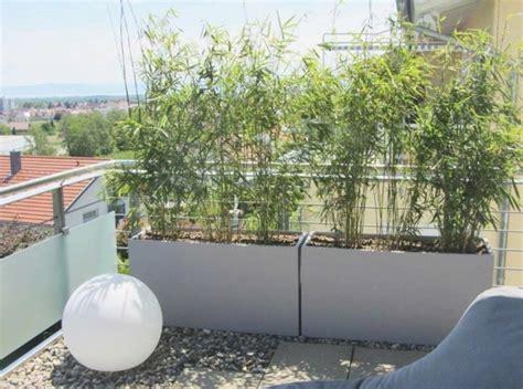 balkon sichtschutz pflanzen
