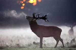 Just Mist It! Ten Amazing Animals On Breathtakingly Cold ...