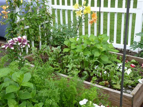plant  winter edible garden    tara kolla