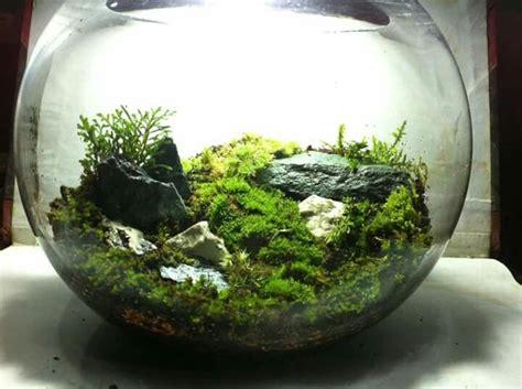 where can i buy moss for a terrarium 647 best images about terrariums vivariums paludariums aquarium on pinterest frogs tropical