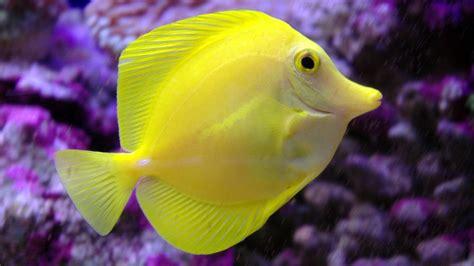 Cute Fish 11 Hd Wallpaper Hdblackwallpapercom