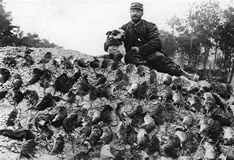 Incredible Photographs Capture Trench Rats Killed By
