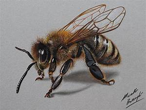 Bee Drawing - Cliparts.co