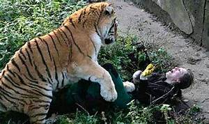 Russian zookeeper mauled by TIGER in front of shocked ...