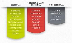 A Beginner U0026 39 S Guide To Amino Acids - The Core U2122