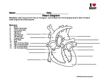 Heart Diagram And Blood Cell Worksheet By Family 2 Family Learning Resources