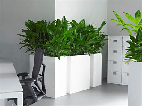 plantes de bureau plante bureau photos de magnolisafleur
