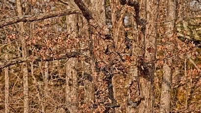 Camo Realtree Wallpapers