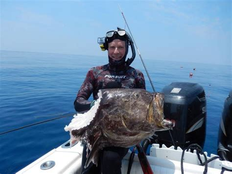 grouper record spearfishing fish turf surf he spear fishing least