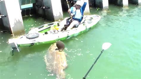 kayak fish catches ever biggest chew grouper goliath seen dip pound bottom