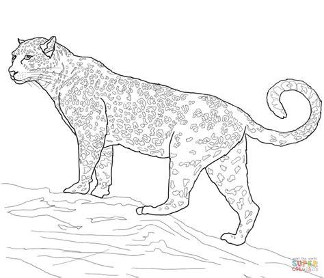 Coloring Jaguar by Jaguar Coloring Pages Kidsuki