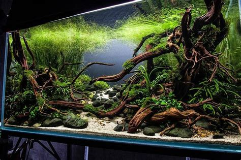 17 best images about for the fish on cichlids aquarium stand and cichlids