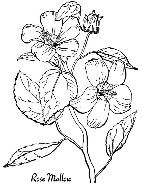 free roses printable coloring page the graphics