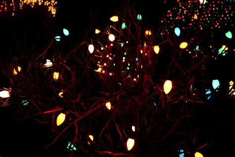 christmas lights at night www imgkid com the image kid