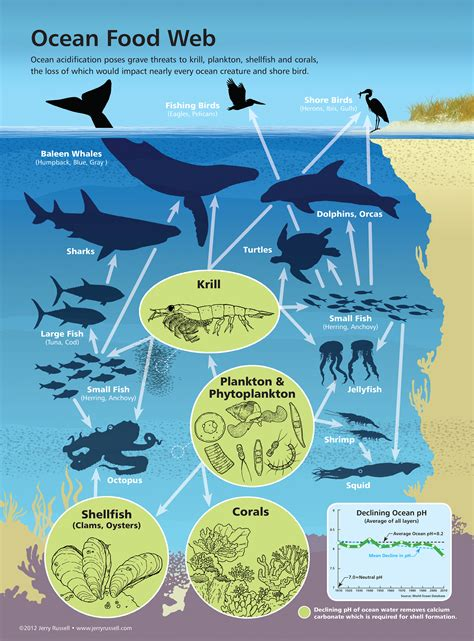 web cuisine impact of acidification on marine food webs marine