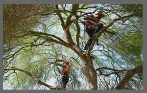 Tree Trimming Service In Jacksonville, Fl. Radiation Therapist Programs. Local Electricity Company Attorney In Atlanta. Madison Wisconsin Colleges And Universities. Refinishing Fiberglass Door Credit Card Deal. Cheapest Cpanel Hosting Forensic Nurse Salary. Metlife Term Life Insurance Review. Bennington House Of Tile Commodity Index Fund. Disney Culinary Program Red Skin Around Mouth