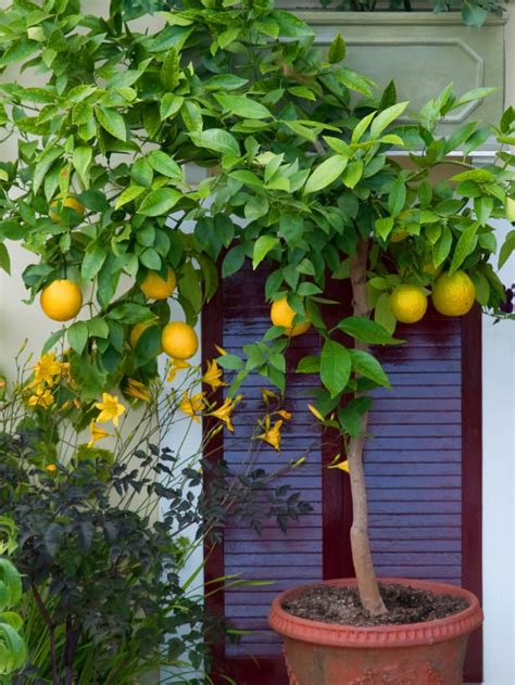 best plants you can grow in containers the garden glove