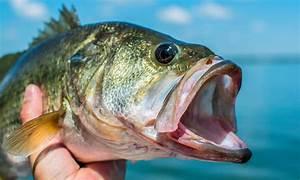 A Quick Guide To Bass Fishing Gear - Aquaviews
