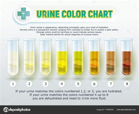 Urine Color Chart 1 Stock Vector Sergey7777 177626026