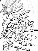Seahorse Seepferdchen Malvorlagen sketch template