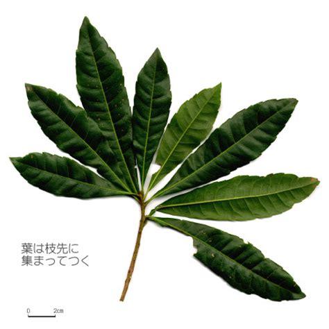 【六甲山系植生電子図鑑】