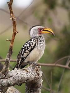 Big Beak Bird Photograph by Michela Villa