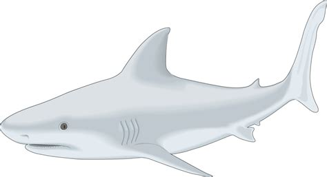Shark Clipart Shark Fish Clipart Png Free