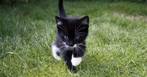 merkwuerdige sachen die katzen machen