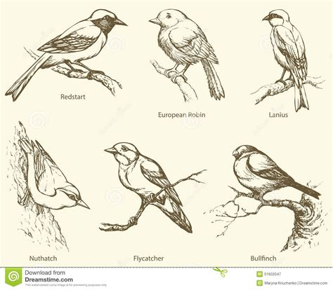 vector set  birds bullfinch redstart nuthatch