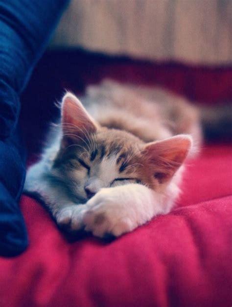 cute kitten  tumblr