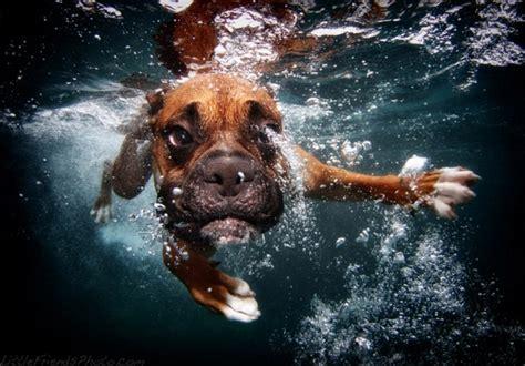 underwater dogs hunde unter wasser planet hund