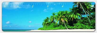 Beach Palm Trees Ruler Tropical Hawaiian Lenticular