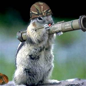 Wallpapers: Funny Cats With Machine Guns HD Wallpapers