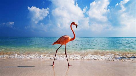 download free hd wallpaper flamingo wallpaper hd download