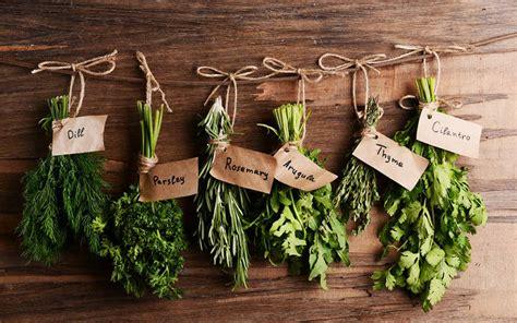 herbes aromatiques en cuisine les herbes aromatiques de l automne