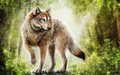 Wolf Wolves Wallpapers Gray Desktop Fantasy Angry