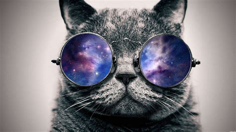 galaxy cats space cat with galaxy glasses pics about space