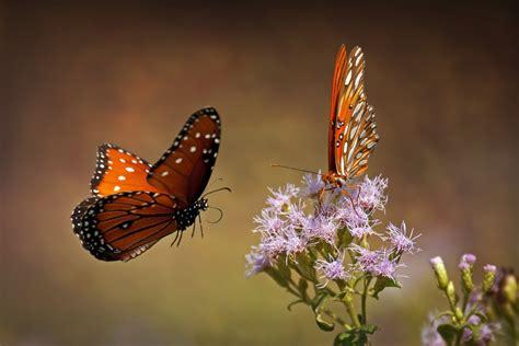 px blog  breathtaking photographs  butterflies