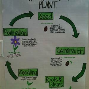 Third Of Life : plant life cycle 2nd grade science pinterest second ~ A.2002-acura-tl-radio.info Haus und Dekorationen