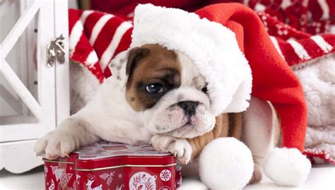 7 best christmas gifts for dogs that will last until the