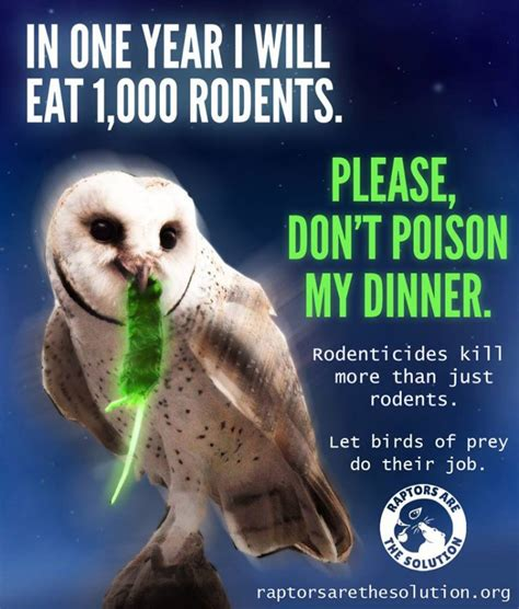 evidence of rodenticides found in california owls