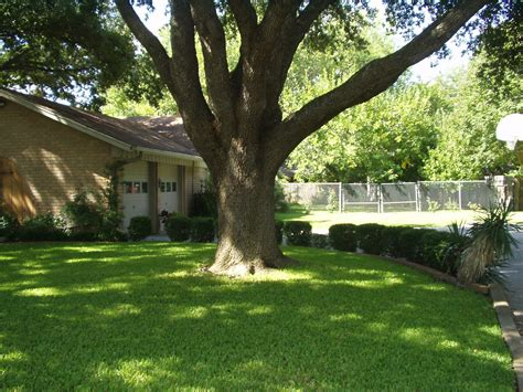 front yard trees top 28 trees for the front yard palm front yard trees outdoor front yard trees front yard