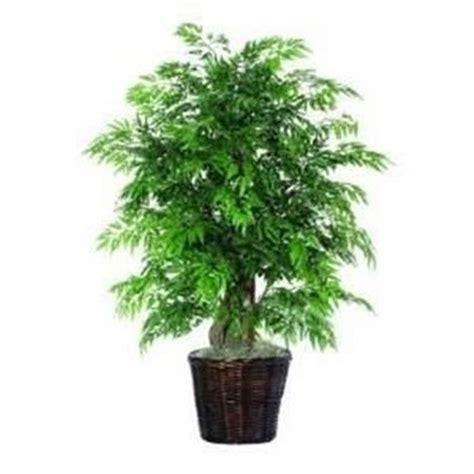 piante sempreverdi da vaso piante da giardino