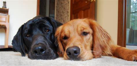 conseils pour un toutou propre solutions canines