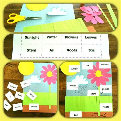 59 best images about preschool planting seeds on 943 | d09d89dfac2b1ae9c34d71e93d3032ea kindergarten science kindergarten classroom