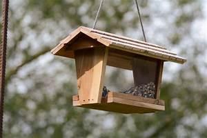 Creare una casa per uccelli fai da te PolliceGreen