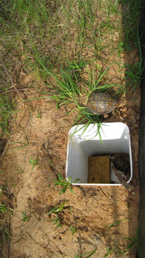 Box Turtle and pitfall trap   Lannoo Lab - Indiana ...