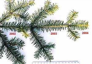 Immergr U00fcne Pflanze  U2013 Wikipedia