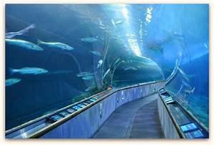 San Francisco Bay Aquarium: Explore this Pier 39 Gem